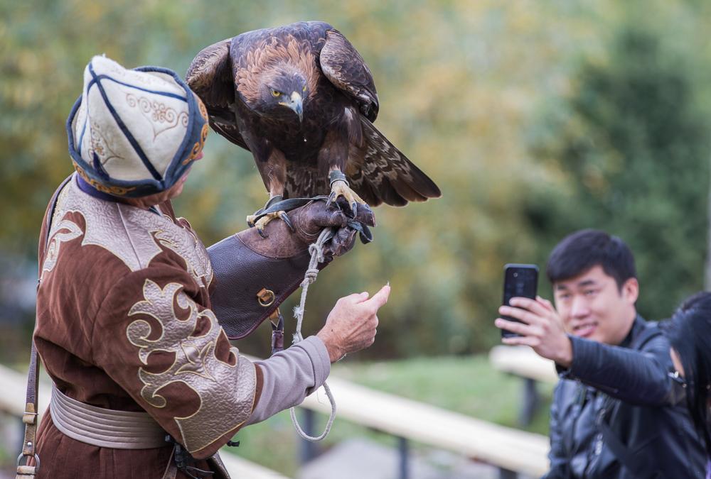 В питомнике «Сункар» разводят хищных птиц для продажи на законных основаниях, в основном охотникам с Ближнего Востока, и выпуска на волю в рамках программы по сохранению редких видов.