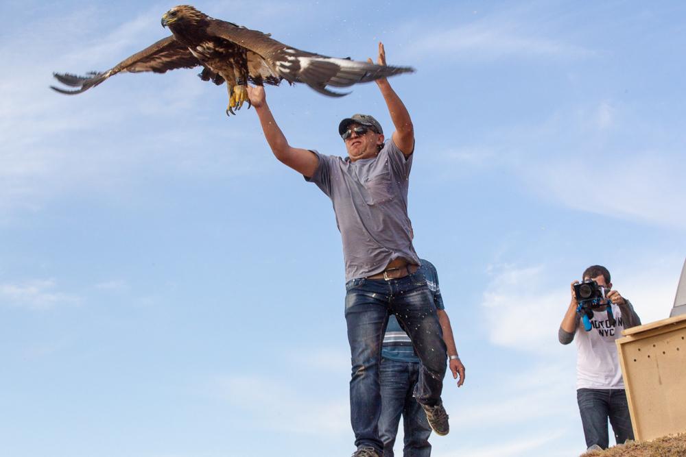Браконьеры продолжают отлавливать хищных птиц, так как они получают колоссальные суммы от незаконной международной торговли редкими и находящимися под угрозой исчезновения видами.
